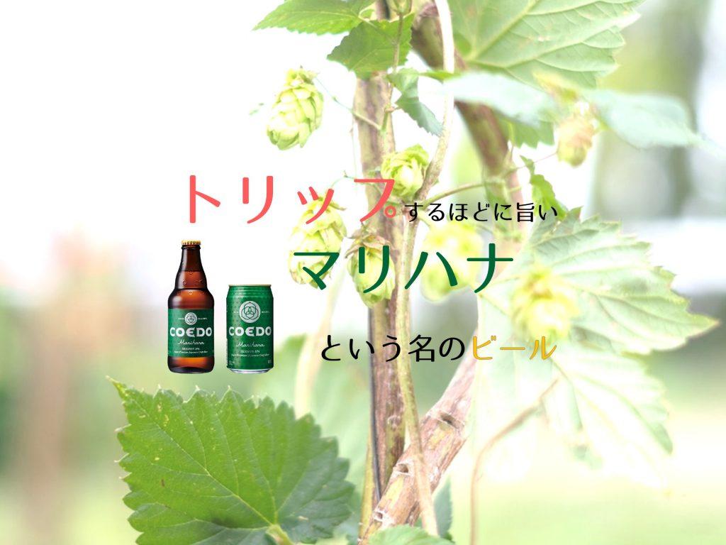 COEDO_毬花_アイキャッチ